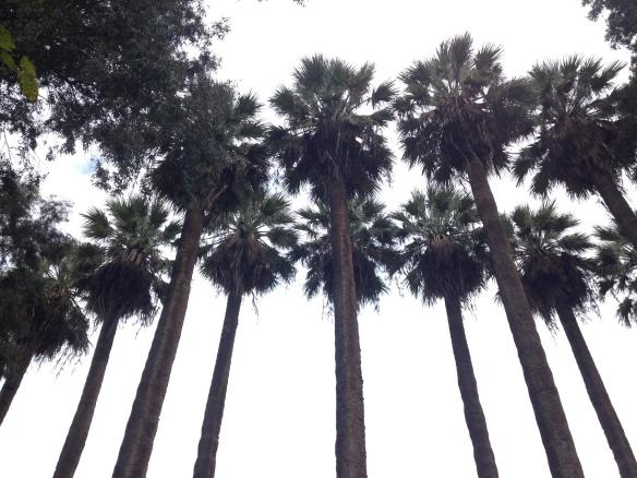 Holy Trees